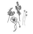 sketch design elements plant berries branch vector image