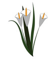 white flowers hand drawn design on white vector image vector image