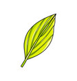 large green succulent palm leaf isolated on white vector image