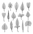 types of leaf outline leaves of different types vector image vector image