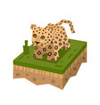 cartoon 3d isometric leopard vector image