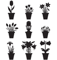 flower pot black vector image vector image