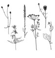 set of ink drawing herbs and flowers vector image vector image