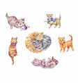 set watercolor kittens cute pets vector image vector image