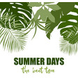 top border composed of plain green tropical leaves vector image vector image