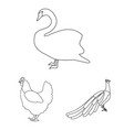 types of birds outline icons in set collection for vector image vector image