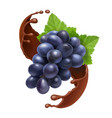 bunch grape in chocolate realistic vector image vector image