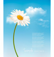 beautiful white daisy in front of the blue sky vector image