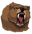 angry bear on white vector image