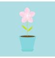 Sakura flower in the pot Japan blooming cherry vector image