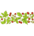 aspberry branch pattern vector image vector image