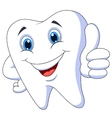 Cute cartoon tooth with thumb up vector image vector image