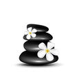 Spa stones with white flowers vector image