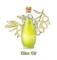 Olive Oil Sketch Concept vector image
