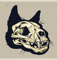 colorful cat skull concept vector image vector image