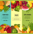 farm fresh fruit vertical flyers set vector image vector image