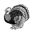 turkey isolated on white background thanksgiving vector image