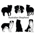 australian shepherd set collection pedigree vector image vector image