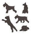collection schnauzer dog icons vector image vector image