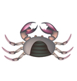 Field Crab Isolated on A White Background vector image