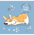 cute corgi dog puppy sniff vector image vector image