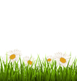 Green grass lawn with white chamomiles isolated on vector image