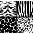 Animal print pattern image