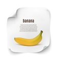 Background with realistic banana vector image vector image