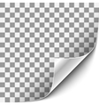 Curled Corner with White Background vector image vector image