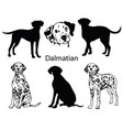 dalmatian set collection pedigree dogs black vector image vector image