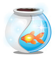 Gold fish inside a round glass aquarium isolated