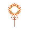 sunflower natural plant petal decoration vector image vector image