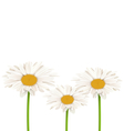 Three chamomiles isolated on white Floral nature vector image vector image