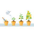 money tree in pot finance profit growth vector image
