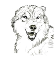 Wolf muzzle sketch vector image vector image