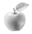 apple in engraving style vector image