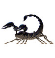 isolated black scorpion vector image vector image