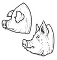 set of pig heads isolated on white background vector image