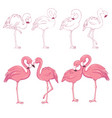sketched flamingos vector image