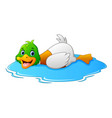cartoon ducks floats on water vector image