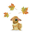 cute rabbit with maple leaves isolated on white vector image vector image