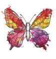 drawing butterfly vector image vector image