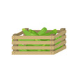 fresh green cucumber in wooden box for home vector image