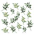 olive branch set italian vector image vector image