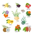 Superfoods in flat style vector image vector image