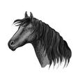 Horse head sketch portrait vector image vector image