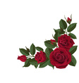 Red roses buds and green leaves vector image