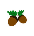 acorns of strong oak icons of color vector image vector image