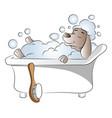 dog in bathtub vector image