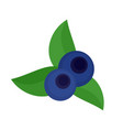 eco blueberry icon flat style vector image vector image